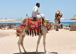 Курорты Египта ждут авиарейсов из России: готовить ли туристам чемоданы?