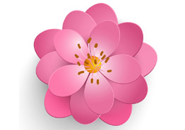 Цветение сакуры в Японии и Корее – 2020