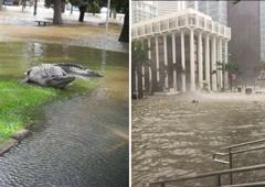 Репетиция конца света: репортаж из Майами