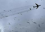Angry birds: как аэропорты борются с птицами